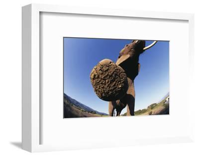 Bottom of Elephant's Foot-DLILLC-Framed Photographic Print