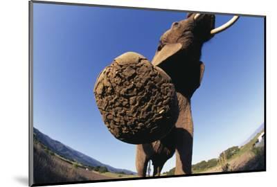 Bottom of Elephant's Foot-DLILLC-Mounted Photographic Print