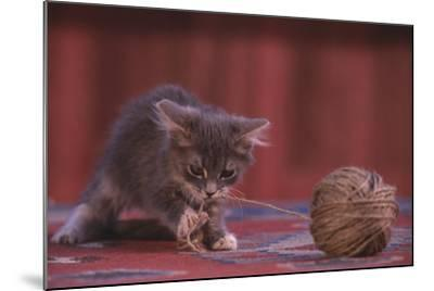 Kitten Playing with Ball of String-DLILLC-Mounted Photographic Print