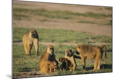 Baboon Family-DLILLC-Mounted Photographic Print