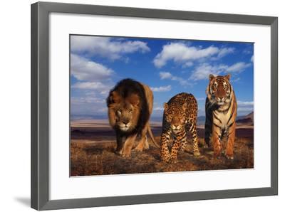 Lion, Jaguar, and Tiger-DLILLC-Framed Photographic Print
