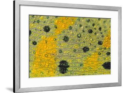 Meller'schameleon-DLILLC-Framed Photographic Print