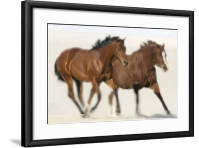 Galloping Quarterhorses-DLILLC-Framed Photographic Print