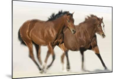 Galloping Quarterhorses-DLILLC-Mounted Photographic Print
