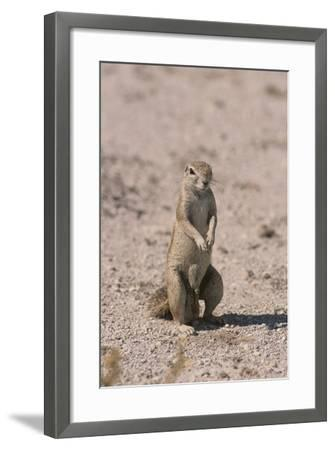 Ground Squirrel Standing Up-DLILLC-Framed Photographic Print