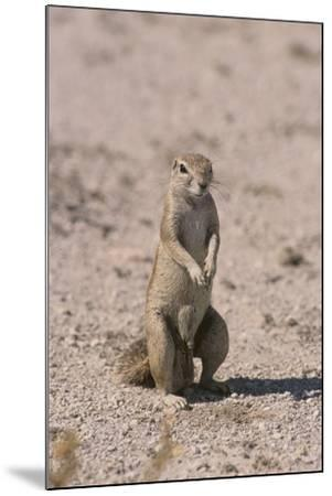 Ground Squirrel Standing Up-DLILLC-Mounted Photographic Print