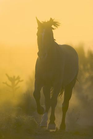 Spanish Mustang-DLILLC-Framed Photographic Print