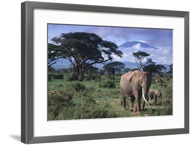 Elephant and Calf in Amboseli National Park-DLILLC-Framed Photographic Print