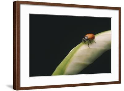 Ladybug-DLILLC-Framed Photographic Print