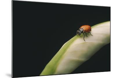 Ladybug-DLILLC-Mounted Photographic Print