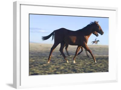Horses Being Rounded Up-DLILLC-Framed Photographic Print
