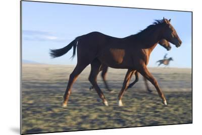 Horses Being Rounded Up-DLILLC-Mounted Photographic Print