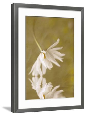Daisy Reflection-Kathleen Clemons-Framed Photographic Print