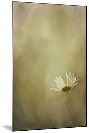 Daisy in the Light-Kathleen Clemons-Mounted Photographic Print