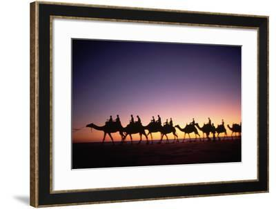 Camels on Beach at Sunset-Paul Souders-Framed Photographic Print
