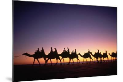 Camels on Beach at Sunset-Paul Souders-Mounted Photographic Print