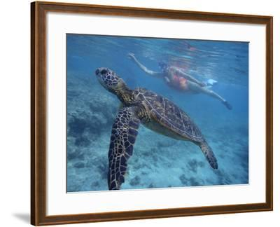Green Sea Turtle Swimming in Shallow Water-DLILLC-Framed Photographic Print
