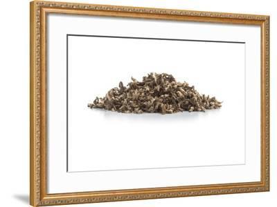 Dry Tea-Fabio Petroni-Framed Photographic Print