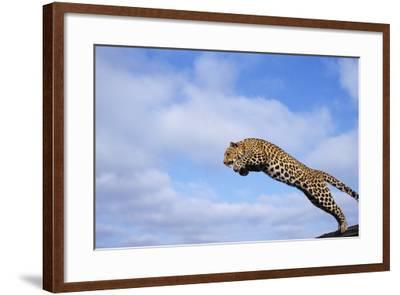 Leopard Jumping-DLILLC-Framed Photographic Print