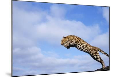 Leopard Jumping-DLILLC-Mounted Photographic Print
