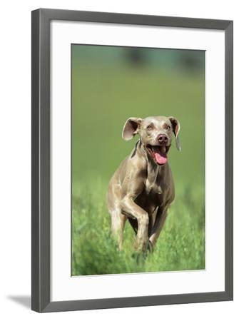 Dog Racing through Grass-DLILLC-Framed Photographic Print