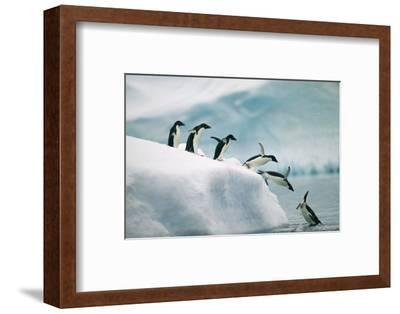 Penguins Jumping into Ocean-DLILLC-Framed Photographic Print