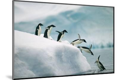 Penguins Jumping into Ocean-DLILLC-Mounted Photographic Print