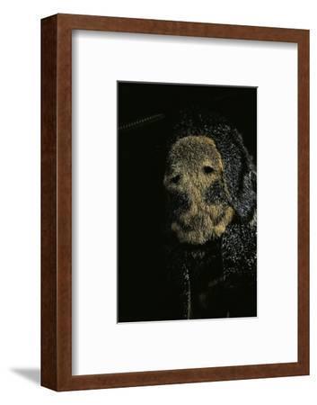 Acherontia Atropos (Death's Head Hawk Moth) - Detail-Paul Starosta-Framed Photographic Print