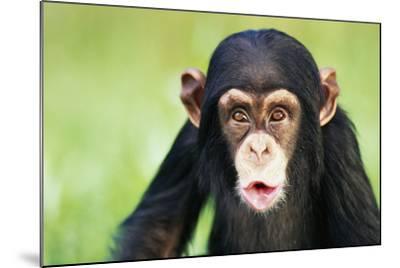 Young Chimpanzee Puckering-DLILLC-Mounted Photographic Print