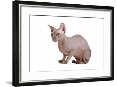 Sphinx Cat-Fabio Petroni-Framed Photographic Print