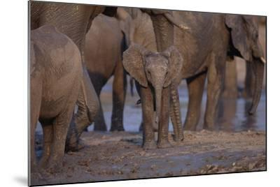 Young and Adult African Elephants-DLILLC-Mounted Photographic Print