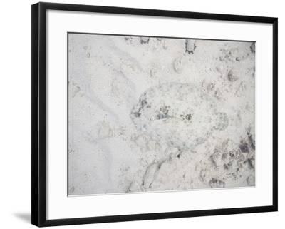 Camouflaged Fish-DLILLC-Framed Photographic Print