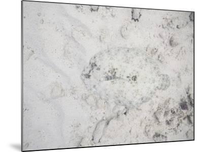 Camouflaged Fish-DLILLC-Mounted Photographic Print