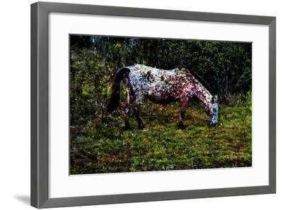 Piebald--Framed Photographic Print