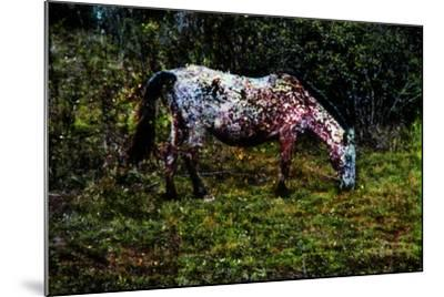 Piebald--Mounted Photographic Print