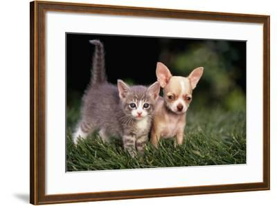 Kitten and Chihuahua Puppy-DLILLC-Framed Photographic Print