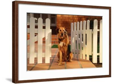 Dog Waving Goodbye from Gate-DLILLC-Framed Photographic Print