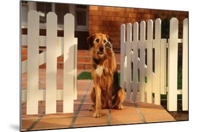 Dog Waving Goodbye from Gate-DLILLC-Mounted Photographic Print