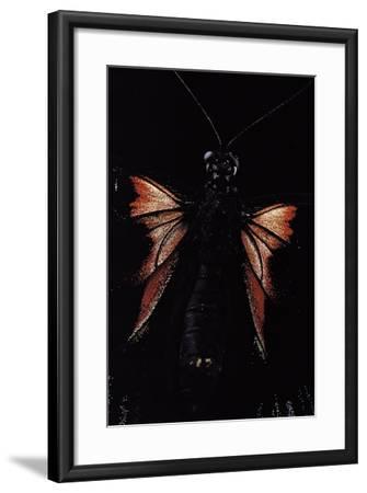 Papilio Rumanzovia (Scarlet Mormon) - Female Detail-Paul Starosta-Framed Photographic Print