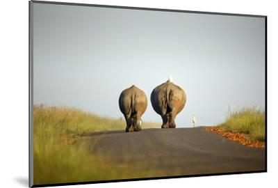 White Rhinos Walking on Road, Rietvlei Nature Reserve-Richard Du Toit-Mounted Photographic Print
