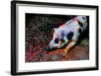 Pig-Andr? Burian-Framed Photographic Print