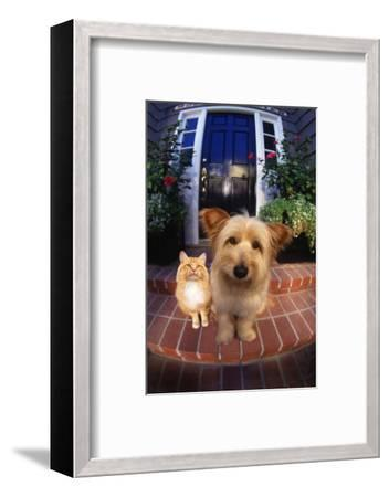 Terrier and Orange Tabby Waiting on Front Stoop-DLILLC-Framed Photographic Print