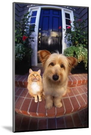 Terrier and Orange Tabby Waiting on Front Stoop-DLILLC-Mounted Photographic Print
