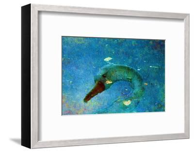 Swan-Andr? Burian-Framed Photographic Print