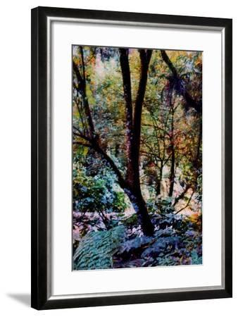 Nature-Andr? Burian-Framed Photographic Print