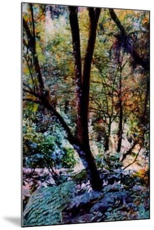 Nature-Andr? Burian-Mounted Photographic Print