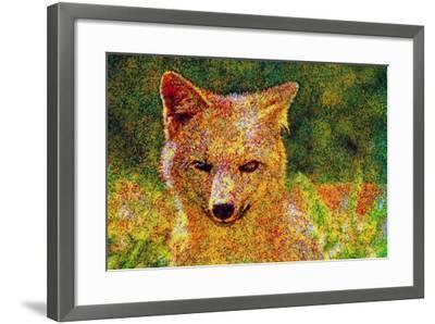 Fox--Framed Photographic Print