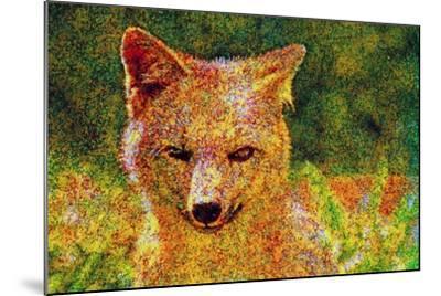 Fox--Mounted Photographic Print