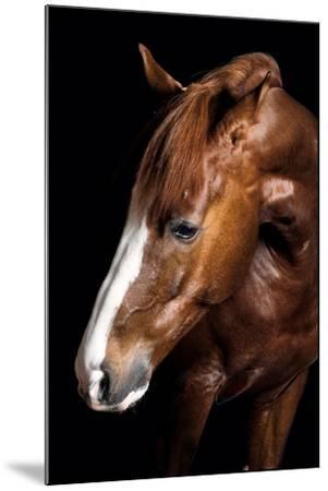 Horse-Fabio Petroni-Mounted Photographic Print