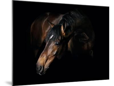 Horse-Fabio Petroni-Mounted Photographic Print